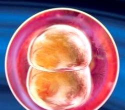 2 Тиждень вагітності. Фото і відео