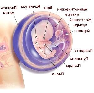 9 Тиждень вагітності
