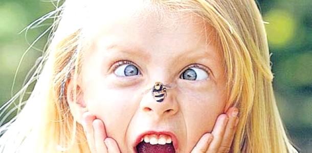Алергія на укуси комах