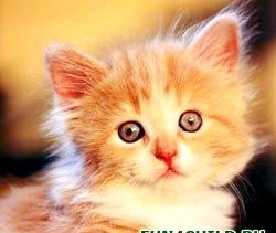 Англійські вірші про кішку. Poems about cats