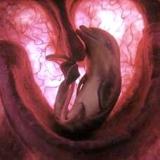BBC: формування особи в утробі матері