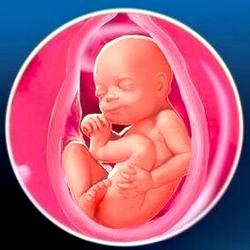 Вагітність: 7 місяць (25-28 тижні)