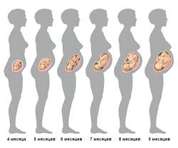 Вагітність: коли почне рости животик? фото