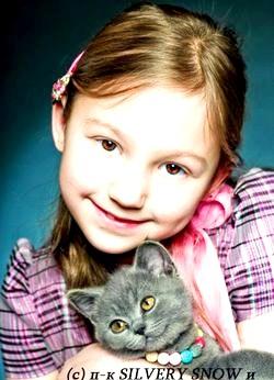 Британські кошенята для дитини фото