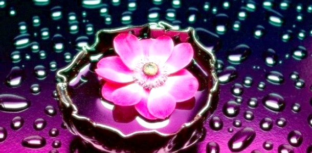 Дитячі оповідання: Чарівна квітка фото