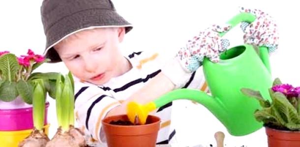 Домашні поради: як захистити кімнатні рослини від шкідників (відео) фото