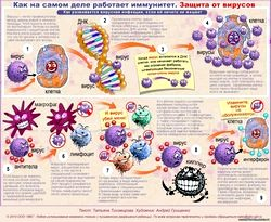 Імунітет: для захисту від вірусів