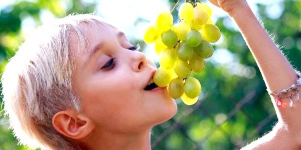 Як вибирати виноград (відео)