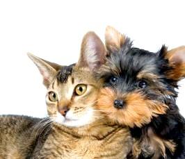 Як вибрати дитині домашня тварина? фото
