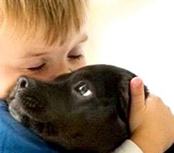 Як вибрати собаку для дитини? фото