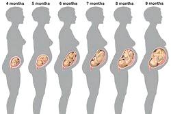 Календар вагітності. Перший триместр по тижнях