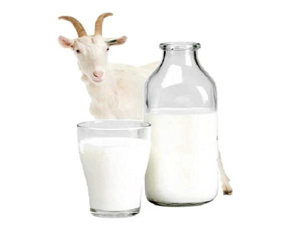 Козяче молоко: користь і шкода фото