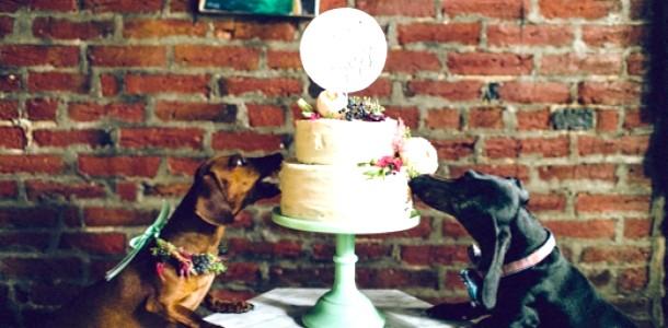 Love Story: зворушлива весілля двох закоханих собак (фото, ВІДЕО)