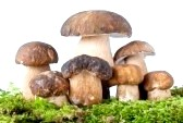 Чи можна їсти гриби при годуванні груддю?