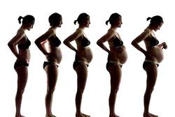 Перший триместр вагітності