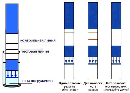 Тест смужки на вагітність принцип використання