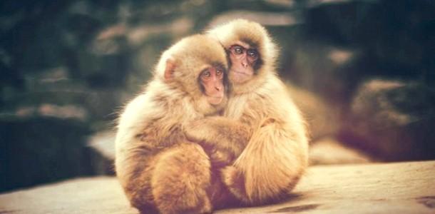 Вечірня казка. Про мавпах-красунях фото