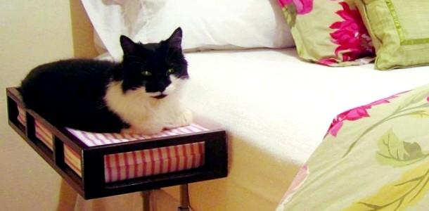 Речі, які сподобаються кішці (ФОТО)