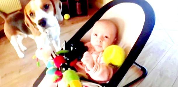 ВІДЕОпозітів: собака намагається заманити малюка в гру фото