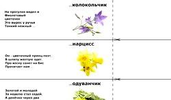 Загадки про квіти