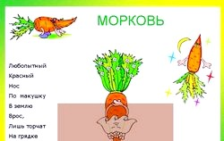 Загадки про морквині
