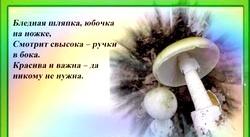 Загадки про гриби