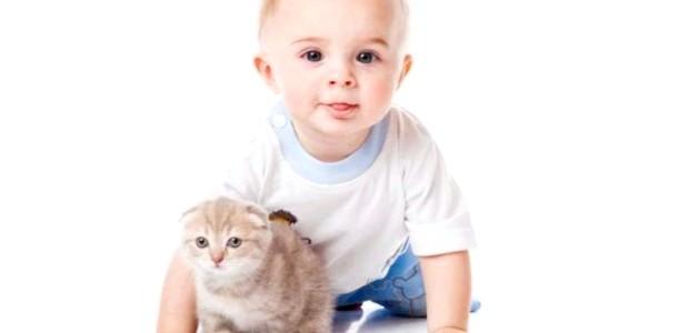 Як вибрати кошеня для дитини (відео)