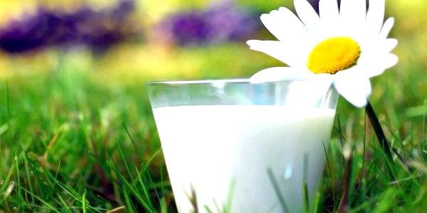 Як вибрати молоко на ринку (відео)