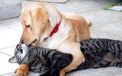 Кращі породи собак для дітей