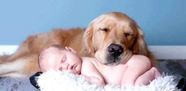 Новонароджений і домашні тварини: корисні поради
