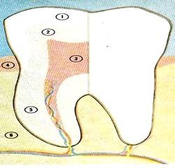 Основи догляду за зубами фото