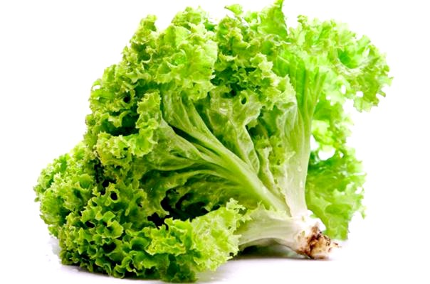 Зелений салат і його користь