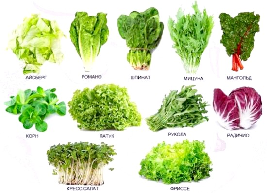 різновиди салату