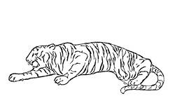 Розмальовки для дітей тигр фото