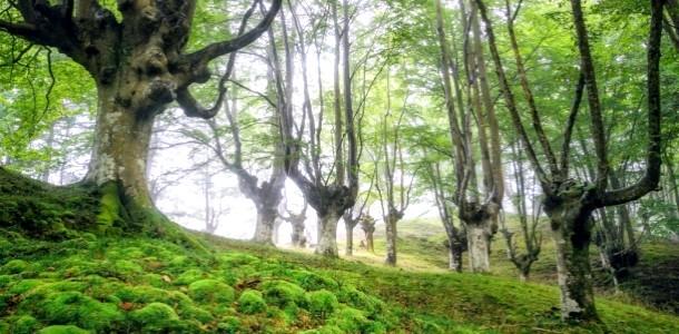 Казкових ліс в Іспанії (ФОТО)