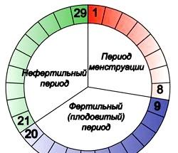 Цикл овуляції