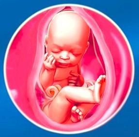 35 тиждень вагітності