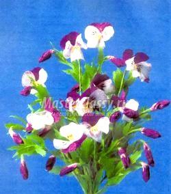 Квіти з гофровані паперу. Тюльпани. Майстер клас з покроковий фото