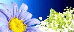 Квіти. Як Зберегти Свіжість?