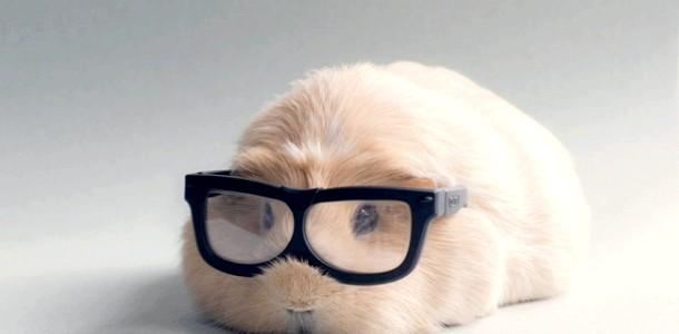 ФОТОпозітів: наймиліша морська свинка Бубу (ФОТО)