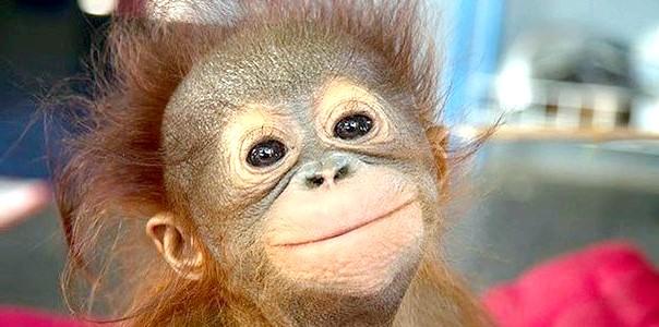 ФОТОпозітів: тварини, які вміють усміхатися