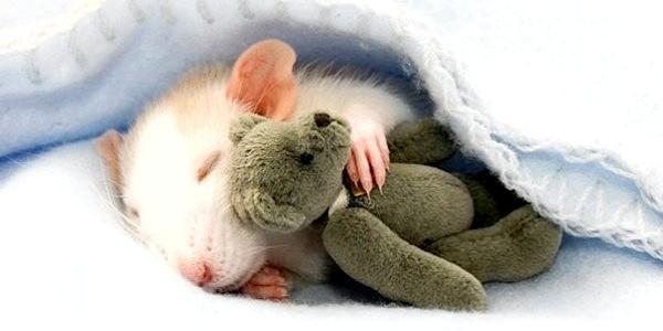 ФОТОпозітів: тварини сплять в обнімку з м'якими іграшками