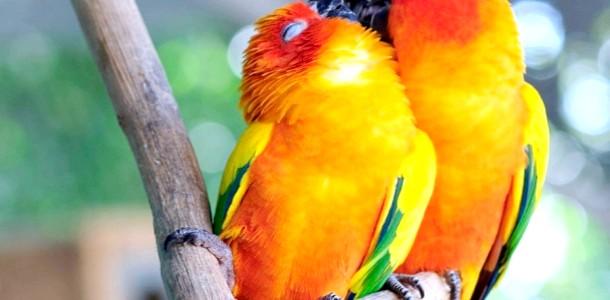 ФОТОпозітів: тварини теж вміють цілуватися