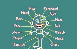 Вірші про частини тіла англійською мовою