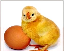 Яйця. Користь и вітаміни